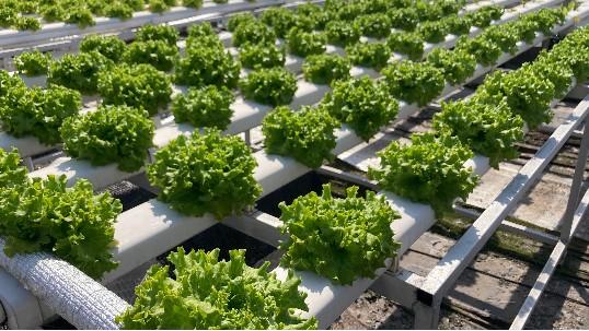 无土栽培助力社区农业!