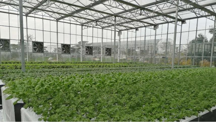 无土栽培管道水培蔬菜种植基地案例图来啦!