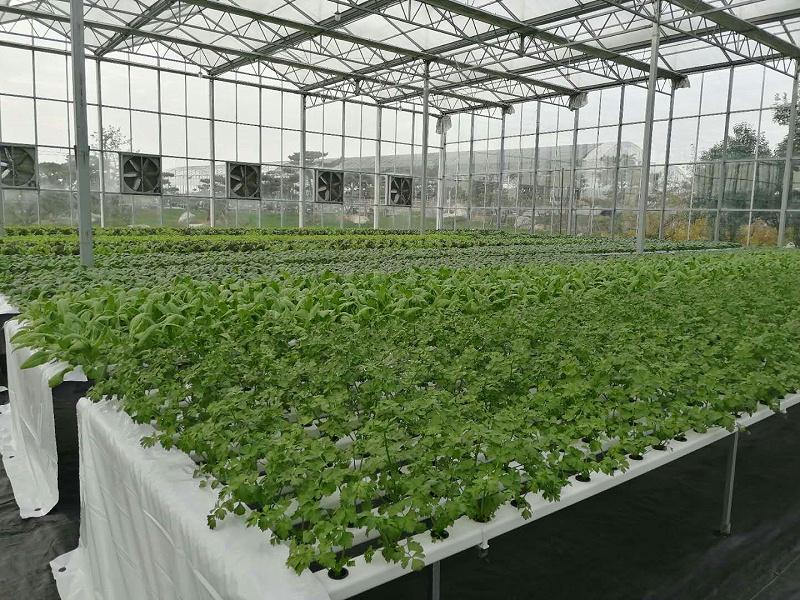 无土栽培管道水培蔬菜种植基地的案例图