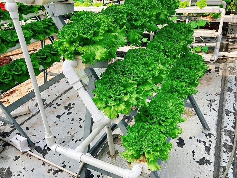 图:荣成农业 40孔立体种植架