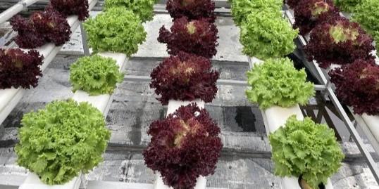 无土栽培管道组成的式样,你知道几种呢?