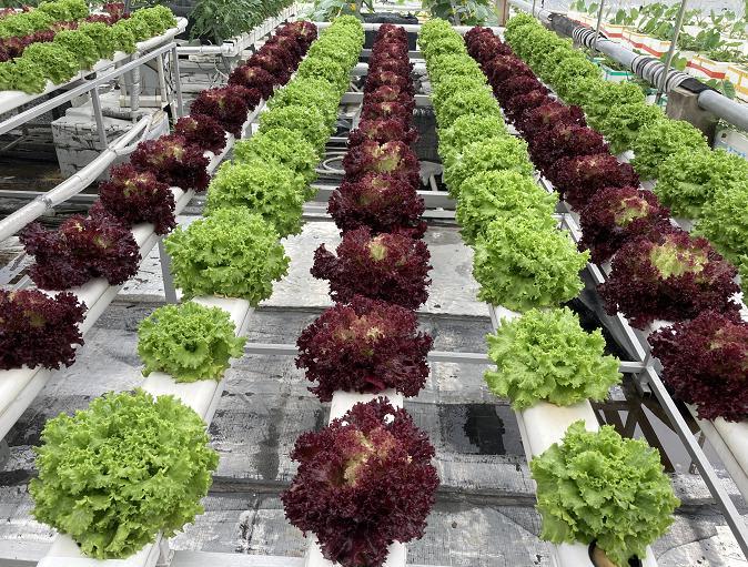 荣成农业 1蔬乐管水培管平面式