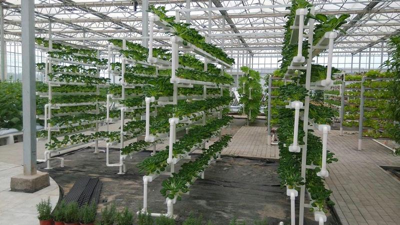 蔬乐管水培管道工程案列