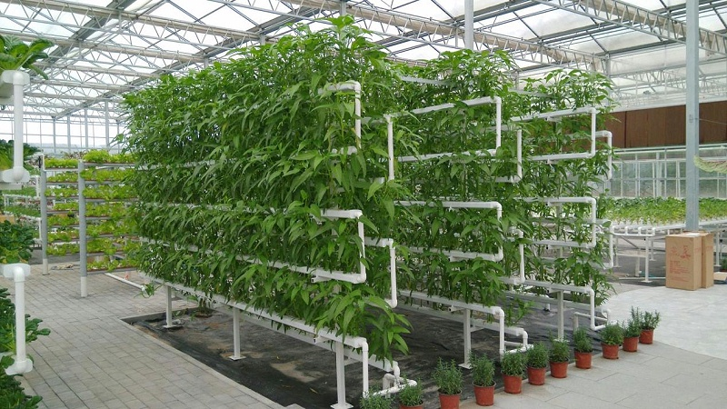 蔬乐管水培管道工程案列2
