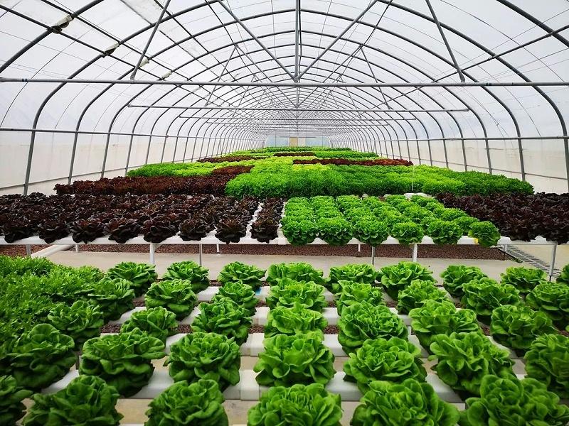 蔬乐管无土栽培管道温室大棚案列