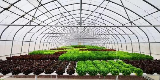 无土栽培让你更省钱!