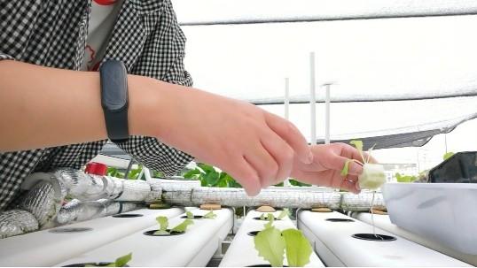 无土栽培育苗:没做好这三步,难怪你育不好苗!