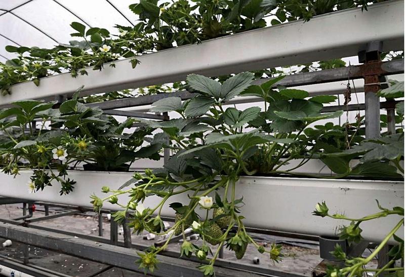图:叶菜类果蔬通用无土栽培种植槽1