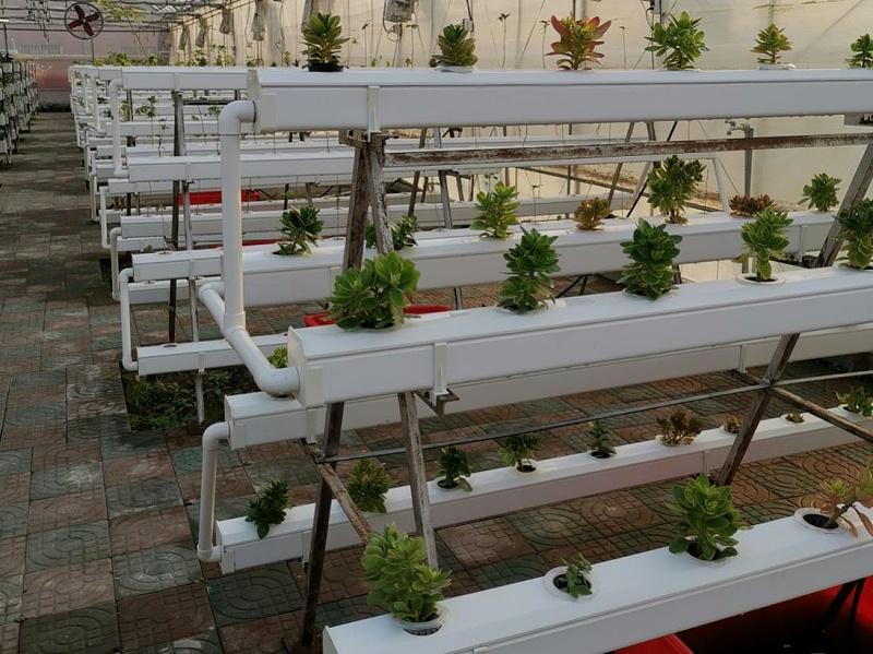 图:叶菜类果蔬通用无土栽培种植槽