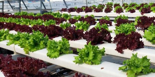 三种新型农业种植技术,你知道几个?