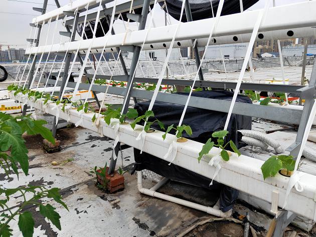 荣成农业 1蔬乐管无土栽培管道种植的黄瓜