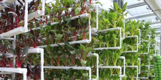 2020年农业农村绿色发展工作要点,我们看准这几点!