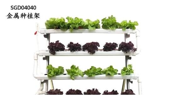 阳台种菜,没有土和肥料,怎么办?我来告诉你!