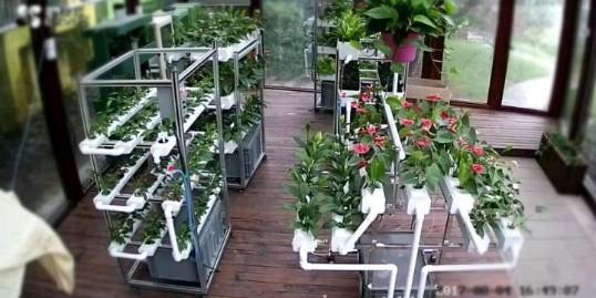 无土栽培未来要这么干!