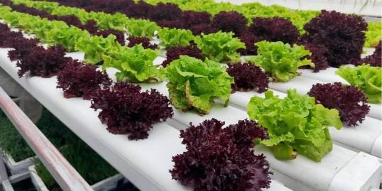 不可辜负的美食——水培蔬菜沙拉