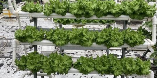 家庭水培蔬菜的8大问题,你遇到了几个?