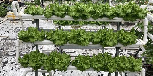 立体种植梯形架,让空间充分的利用起来!