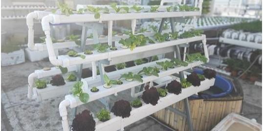 这几种无土栽培的模式,你们知道吗