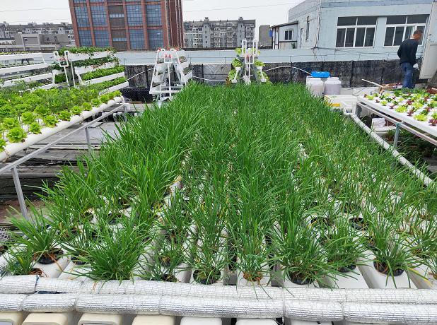 蔬乐管无土栽培管道水培蔬菜案例