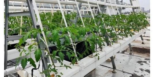 最近盛传的水培蔬菜更健康,靠谱吗?