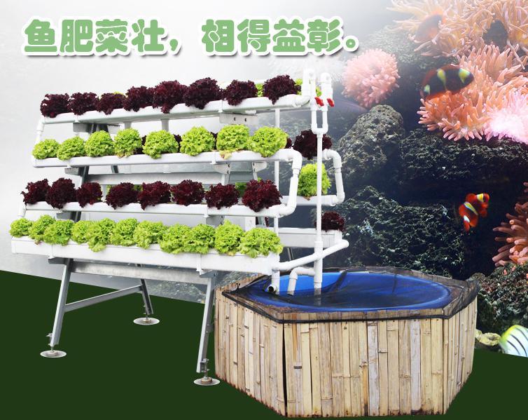 图:南通荣成农业 鱼菜共生系统
