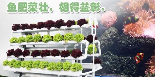 鱼菜共生系统,看准南通荣成!