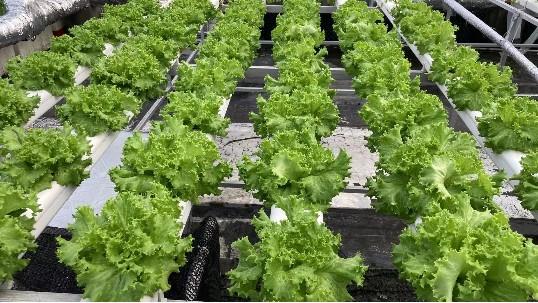 共享农业的5大形势,你知道几个!