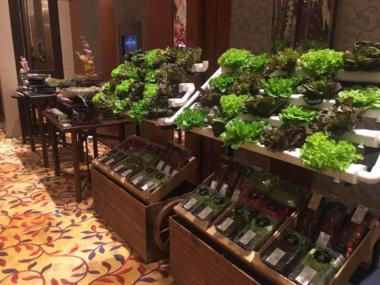 """无土栽培:""""蔬乐管""""携水培蔬菜走进餐厅!"""