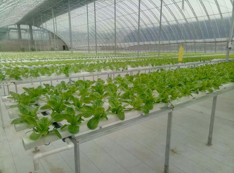 农业园区大棚无土栽培管道种植基地