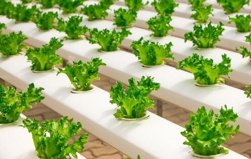 图为江苏荣诚农业的果蔬水培管道用于温室生产