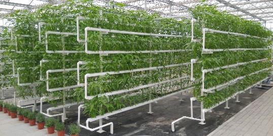 """种地""""不用土"""",产量竟然高那么多!三种无土栽培方法值得收藏"""