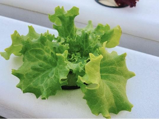 求你了,别在误会水培蔬菜了!