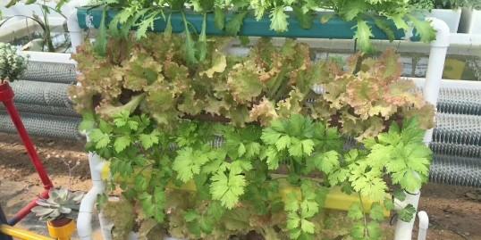 无土栽培种植架,让阳台种菜走进千家万户!