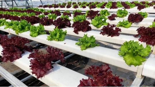 你还在用泡沫箱种菜?现在种菜都用无土栽培设备!