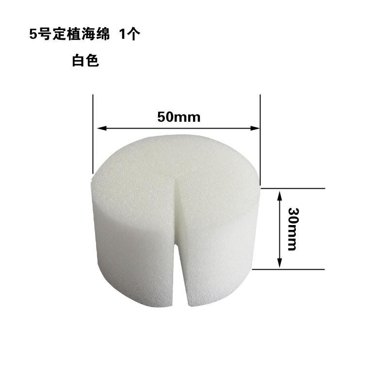 5号白色定植海绵
