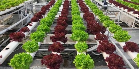 无土栽培的三种方式和特点