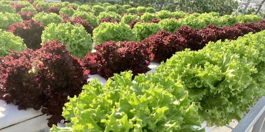 你知道蔬菜管道水培到底是什么样的吗?