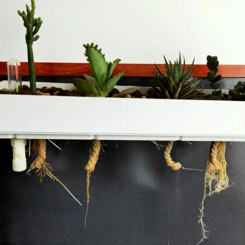 图:绿洲 小型水培设备2