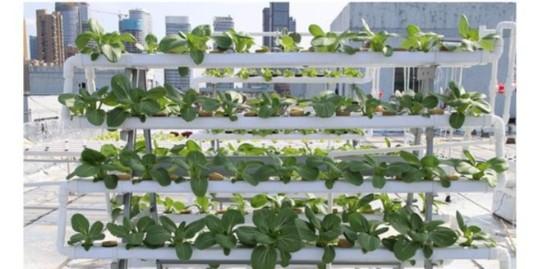 无土栽培阳台种菜:用它种,种菜事半功倍!