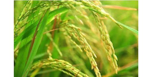 疫情对我国粮食产量有影响吗?看完文章你就明白了!
