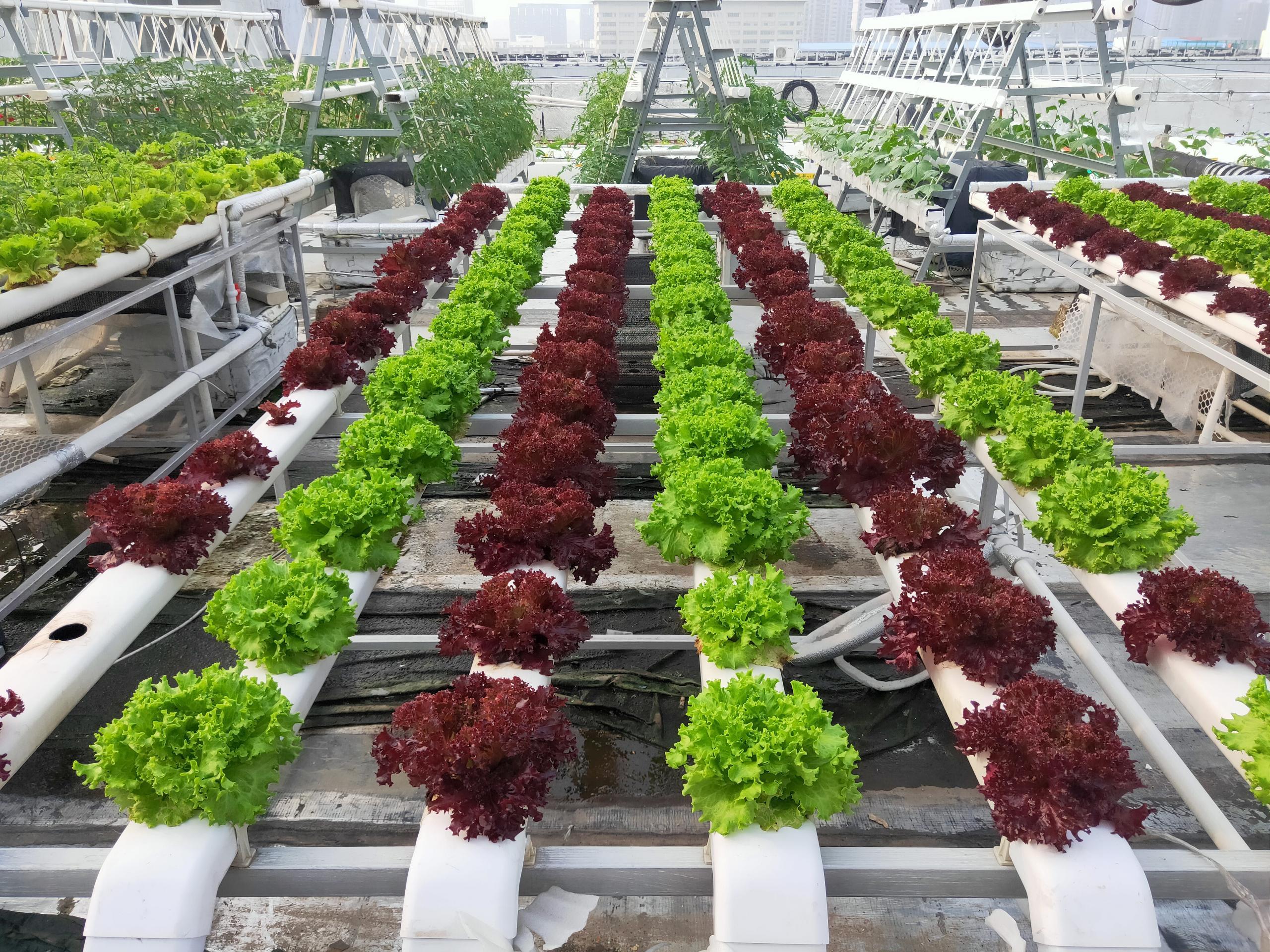 选对水培种植管道,让种菜更轻松!