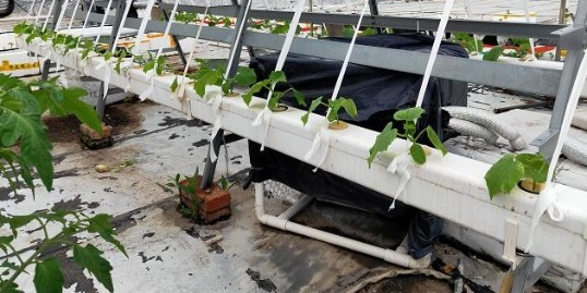 黄瓜无土栽培水培技术