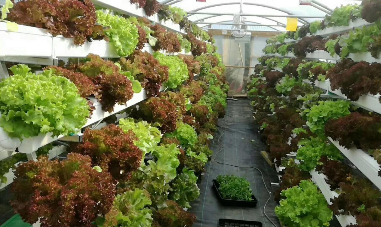 无土栽培管道如何选择,看完文章你就明白了!