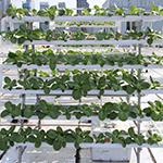 168棵菜金属种植架