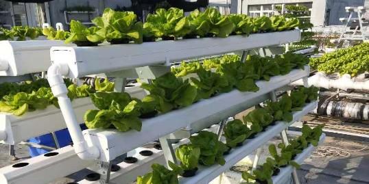阳台蔬菜,用什么种呢?