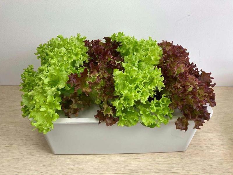 江苏荣诚农业:蔬菜水培设备