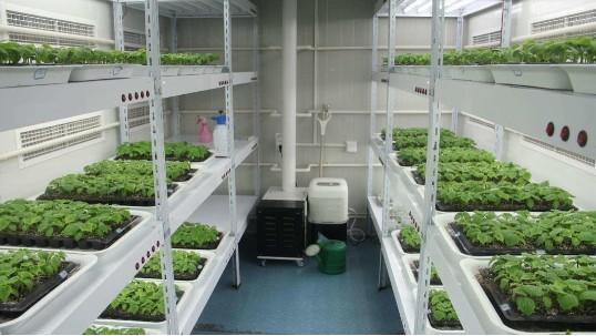 无土栽培:怎么水培大麦苗?