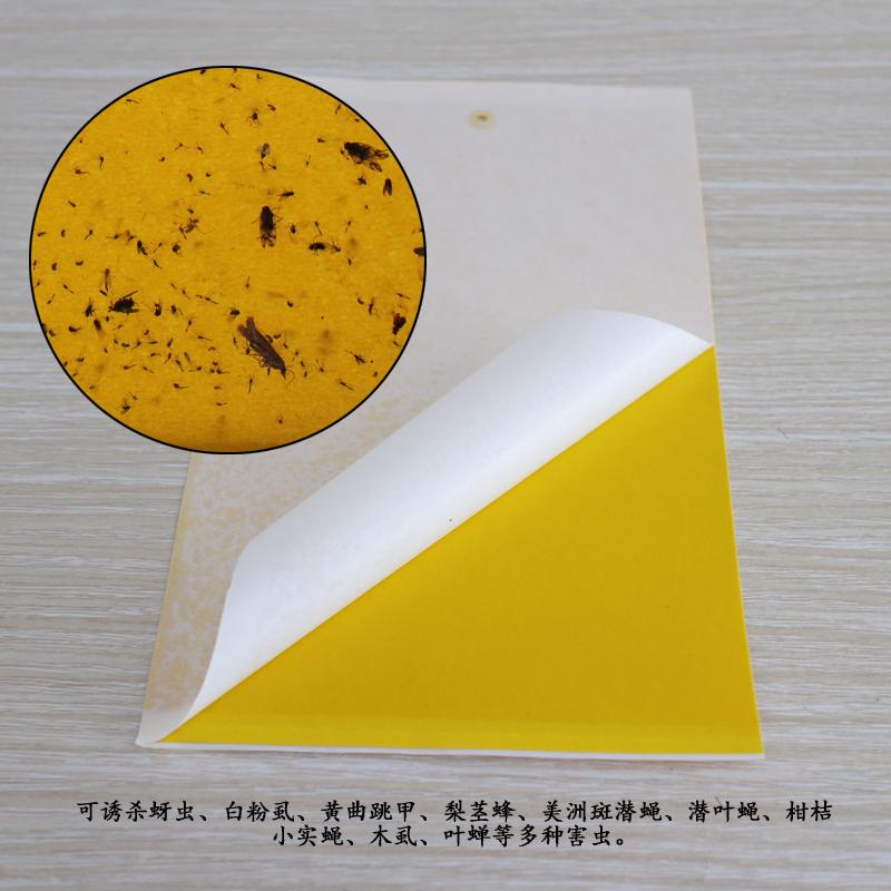 双面粘虫黄蓝色诱虫板