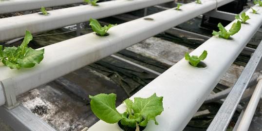 水肥一体化是未来农业的发展方向?