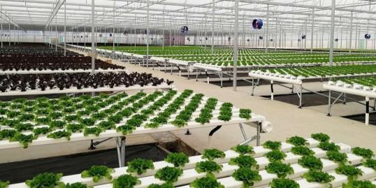 无土栽培设备公司怎么选?